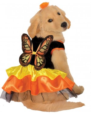 Monarch Butterfly Pet Costume